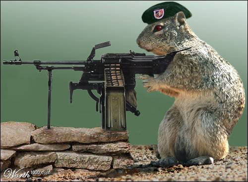 ricky-hanson-squirrel-gun